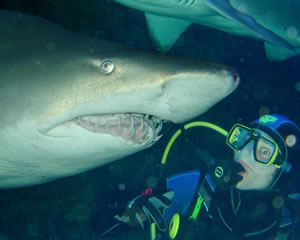 Shark Diving, Certified Diver - Sydney