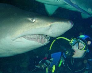 Shark Diving, Certified Diver - Sydney