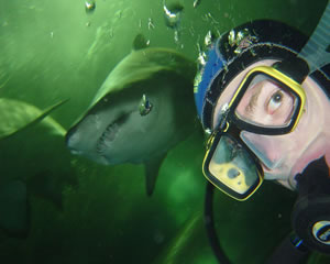 Shark Diving - Sydney WEEKEND