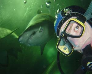 Shark Diving, Non Certified Diver - Sydney