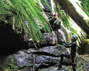 Canyoning, Butterbox Canyon, Intermediate - Blue Mountains