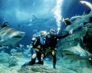 Shark Dive Melbourne Aquarium