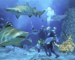 Shark Dive Certified Diver - Mooloolaba, Sunshine Coast