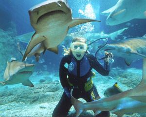 Shark Dive Non-Certified - Mooloolaba, Sunshine Coast
