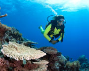 Scuba Dive The Great Barrier Reef, Certified Divers - Cairns