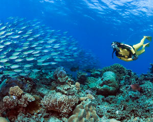 SCUBA Dive The Great Barrier Reef, Non-Certified Divers - Cairns