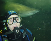 Shark Diving, Certified Scuba Tune Up Diver - Sydney