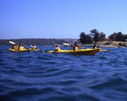 Sea Kayaking, Middle Harbour Eco Tour, Sydney