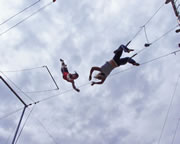 Trapeze, Learn The Flying Trapeze, 5 Lesson Package - Sydney