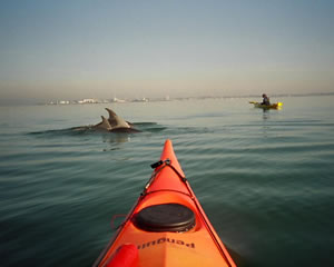 Sea Kayaking, Half Day St Kilda - Melbourne