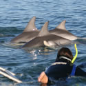 Swim With Wild Dolphins - Glenelg South Australia