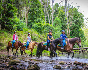 Horse Riding, Guided or Free Range, 2 hours - Sydney