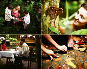 Aboriginal Culture Rainforest and Art Experience Daintree QLD