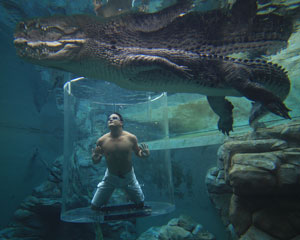 Swim With Crocodiles in the Cage Of Death & Cove Entry - Darwin, NT