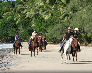 Cape Trib Horse Riding, 90 Minute Beach And Rainforest Ride, Daintree QLD