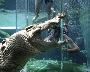 Swim With Crocodiles For 2 Darwin Adrenaline