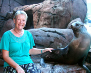 Seal Encounter & Adult Park Entry - Sunshine Coast