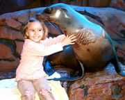 Seal Encounter & Child Park Entry - Sunshine Coast