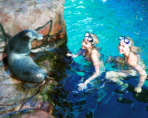 Swim with Seals Including Park Admission, Sunshine Coast