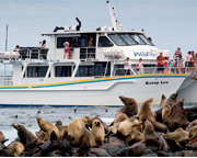 Seal Cruise - Phillip Island