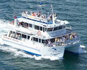 Dolphin Watch Cruise 90 Minutes - Jervis Bay, NSW