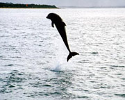 Swim With Dolphins and Seals Mornington Peninsula - For 2
