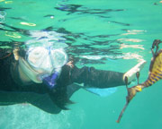 Snorkeling, Snorkel Tour with Sea Dragons - Mornington Peninsula