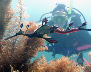 Scuba Diving, Sea Dragon Introductory Dive - Mornington Peninsula