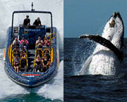 Extreme Whale Watching - SPECIAL 2ND PERSON HALF PRICE - Fremantle, WA