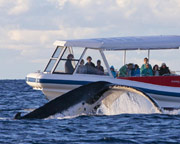Extreme Whale Watching for 2 - Jervis Bay, NSW