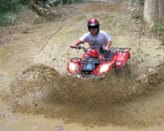 Quad Bike - 1 Hour ATV Rainforest Tour - Cairns