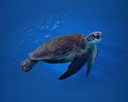 SEA LIFE Sydney Aquarium Entry for 2, Sydney