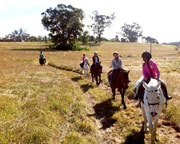 Horse Riding, One Hour Trail Ride with Tuition - Sydney