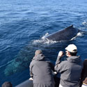 Extreme Whale Watching Safari (Whale Sighting Guarantee) - Sydney