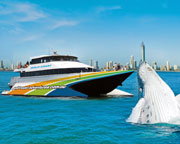 Whale Watching Cruise - Gold Coast