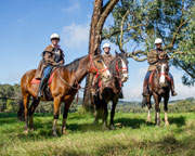 Horseback Winery Tour - Mornington Peninsula, Melbourne (3 Hours)