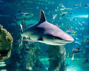 shark reef snorkel at sea life sydney aquarium adrenalin