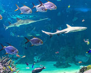 Private VIP Guided Tour of SEA LIFE Sydney Aquarium