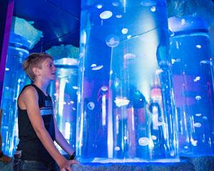 Underwater World SEA LIFE Mooloolaba Aquarium Entry