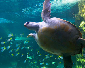 Manly SEA LIFE Sanctuary Admission For 2