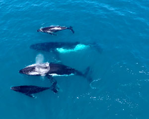 Whale Watching, Weekdays, 2 Hours - Perth
