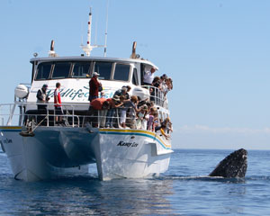 Whale Watching Cruise with Lunch, Melbourne - Phillip Island