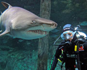 Shark Diving, Non Certified Diver - WINTER WEEKDAY SPECIAL - Sydney