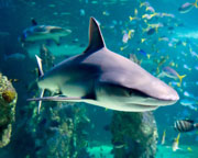 Shark Reef Snorkel at SEA LIFE Sydney Aquarium SPECIAL OPENING OFFER