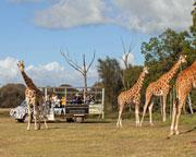 Zoo - Werribee Open Range Zoo Off Road Safari - Melbourne