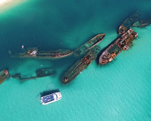 Dolphin & Tangalooma Wreck Cruise INCLUDES GOLD COAST TRANSFERS