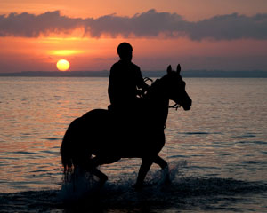 Horse Riding, 2 Hour Twilight Beach Ride - Mornington Peninsula
