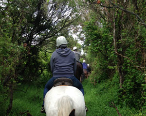 Horse Riding, 50 Minute Bush Ride - Mornington Peninsula