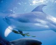 Swim With Dolphins & Seals - Mornington Peninsula, VIC SEASON OPENING SPECIAL