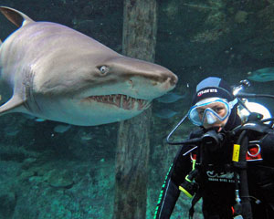 Shark Diving (Weekday) - Manly Aquarium CLOSING JANUARY 2018